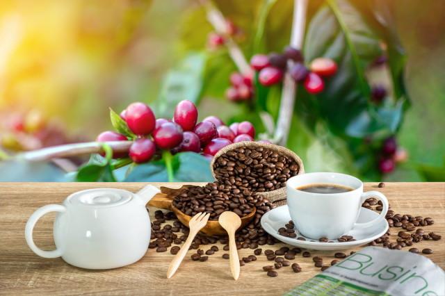 赤く熟したコーヒーの実とコーヒー豆
